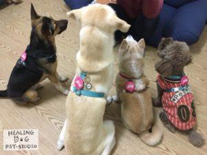 療癒犬的信任
