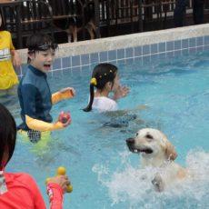 療癒犬夏令營進階班 第四梯