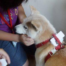 療癒犬夏令營初階班 第二梯