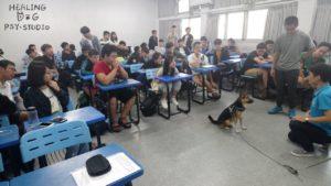 逢甲大學諮商中心 療癒犬 體驗4