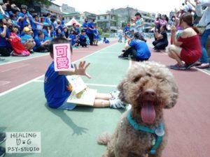 療癒犬 小英雄運動會