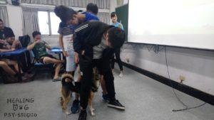 逢甲大學諮商中心 療癒犬 體驗3