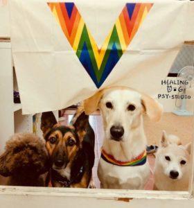 療癒犬 婚姻平權