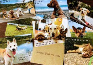 療癒犬 明信片