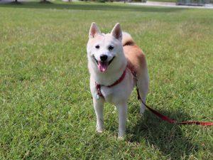 piupiu 療癒犬 療育犬